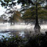Photo of fog on Martin Dies Jr. State Park