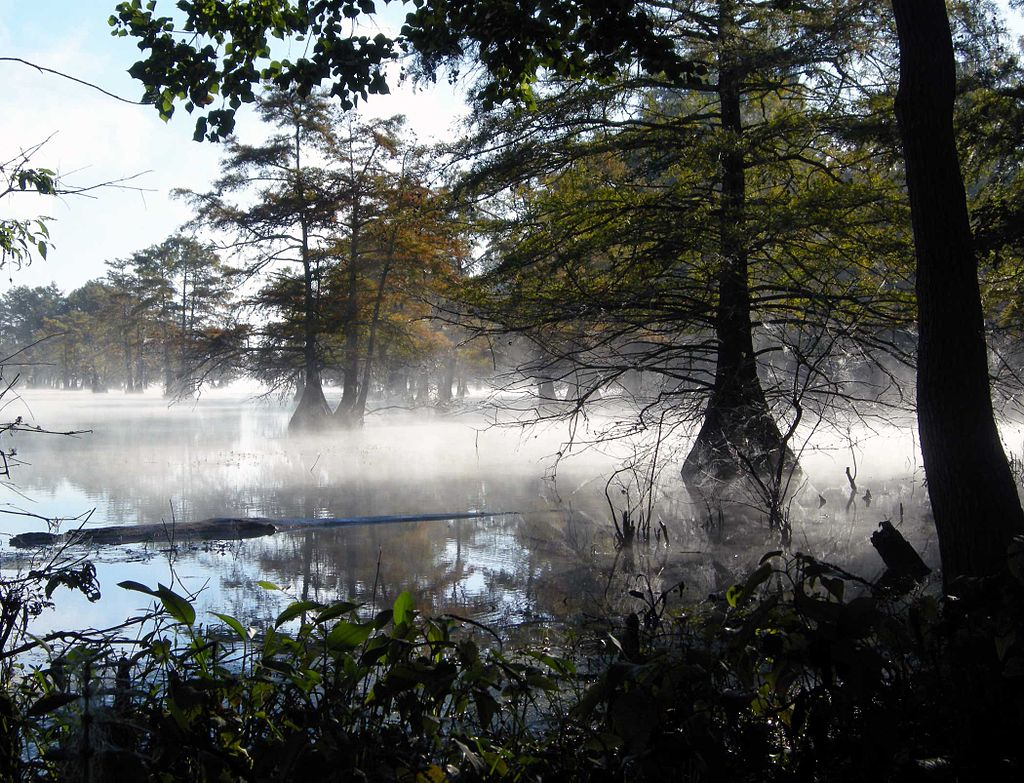 Photo of fog on Martin Dies Jr. State Park